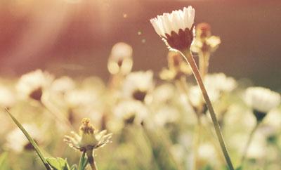 pavasario-darbai-featured